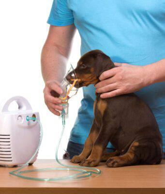 La dispnea nel cane (Foto Adobe Stock)