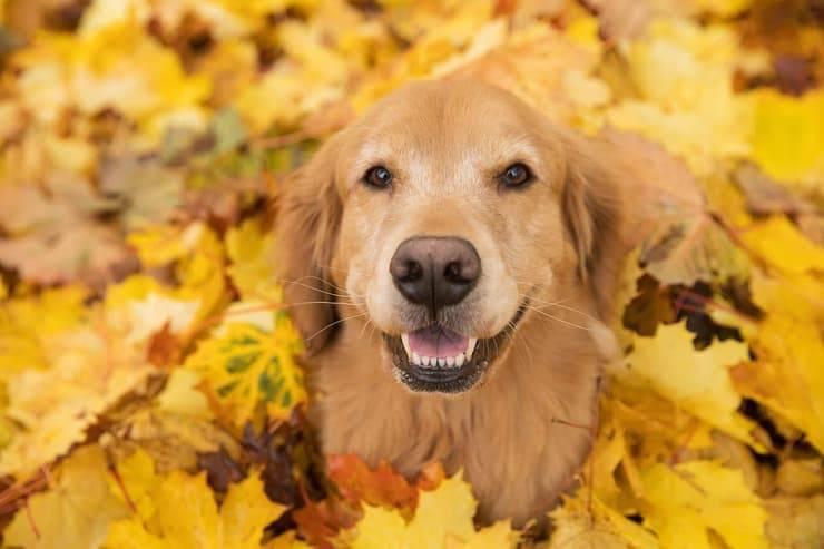 Il cane può mangiare le nocciole? (Foto Adobe Stock)