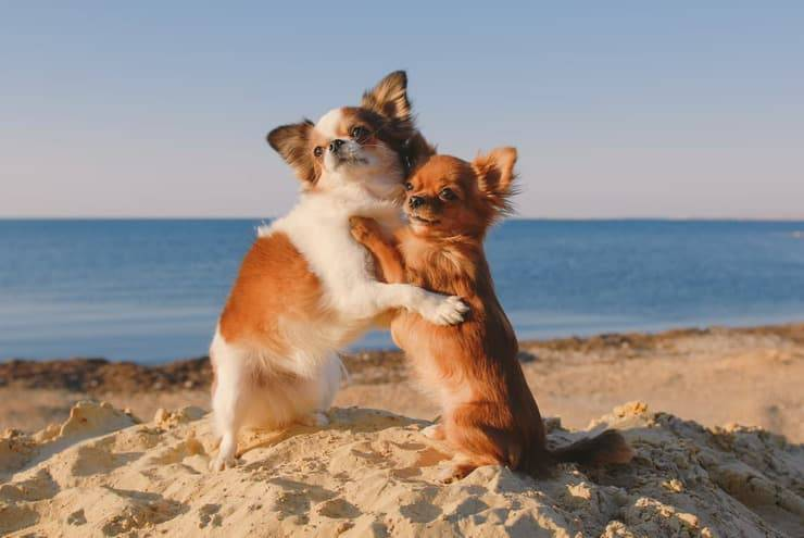 Il cane adulto riconosce la sua mamma? (Foto Adobe Stock)