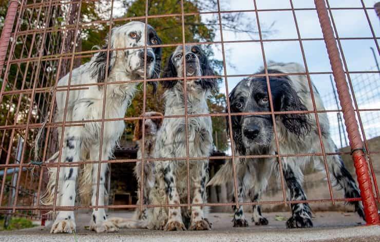 maltrattamenti animali cani gabbia