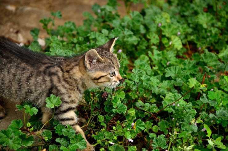 Pettorine per gatti