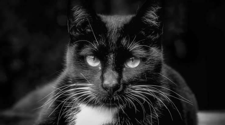 Lo sguardo eloquente del gatto (Foto Pixabay)