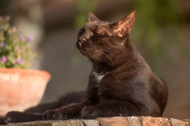 Gatto al sole (Foto Pixabay)