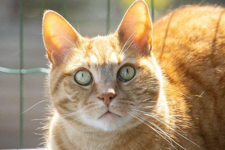 gatto con occhi aperti