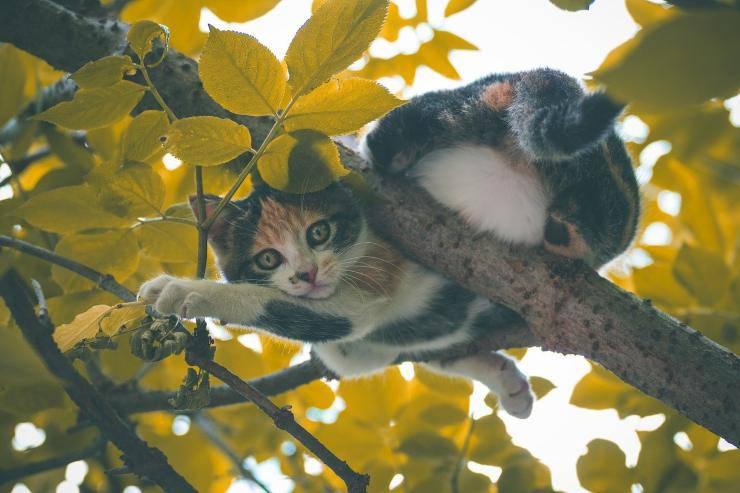 Micio su albero