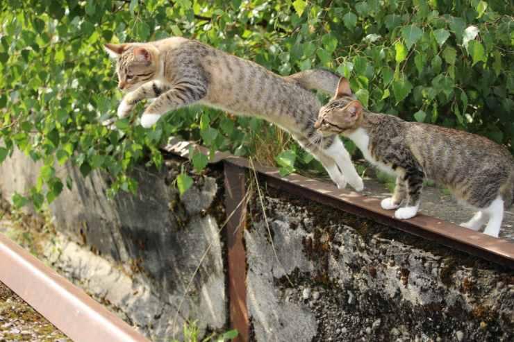 Sindrome del gatto paracadutista