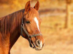 Dermatite del cavallo (Foto Pixabay)
