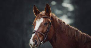 Perché il cavallo non vomita? (Foto Adobe Stock)
