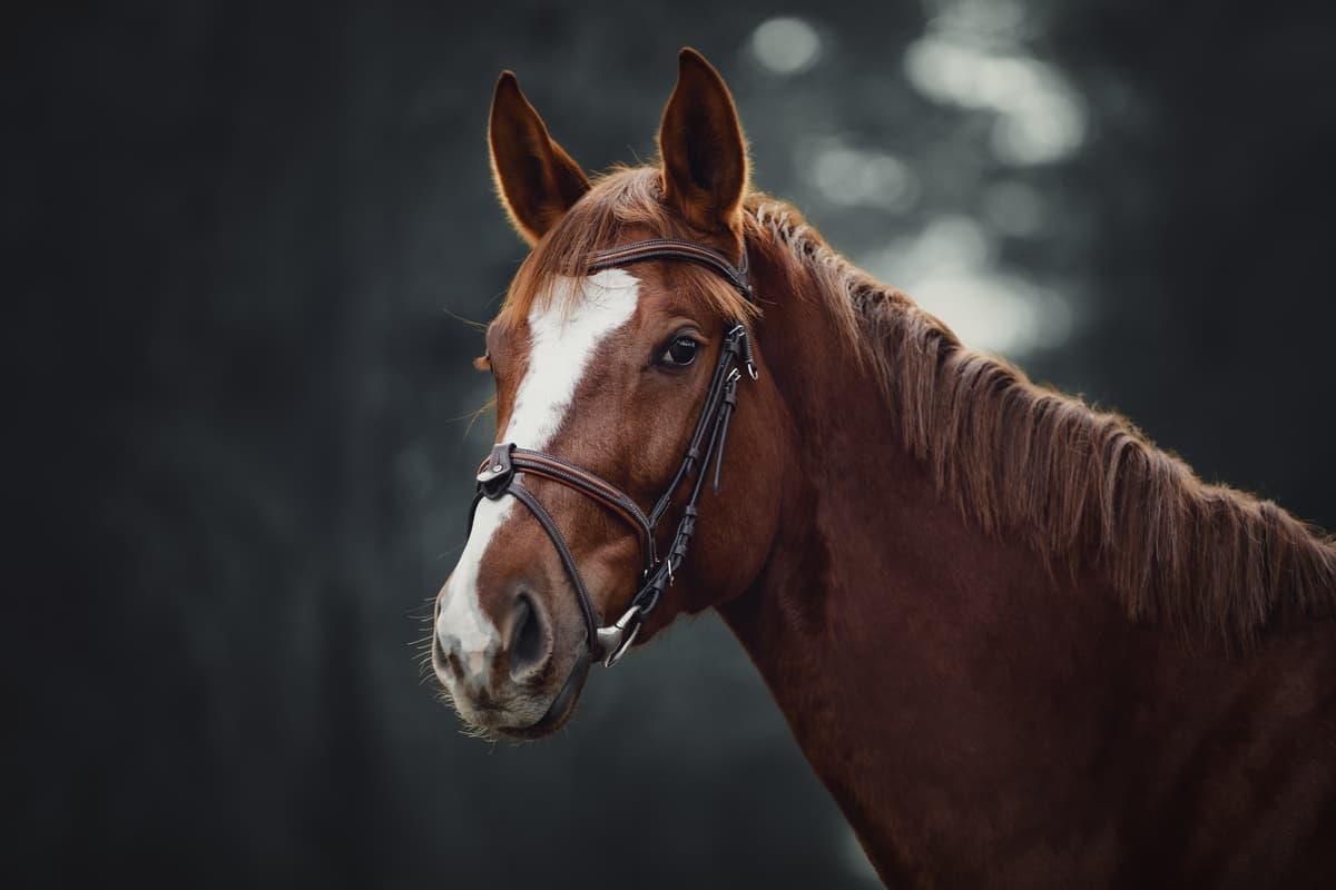 allergia equini