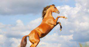 Perché il cavallo impenna? (Foto Adobe Stock)