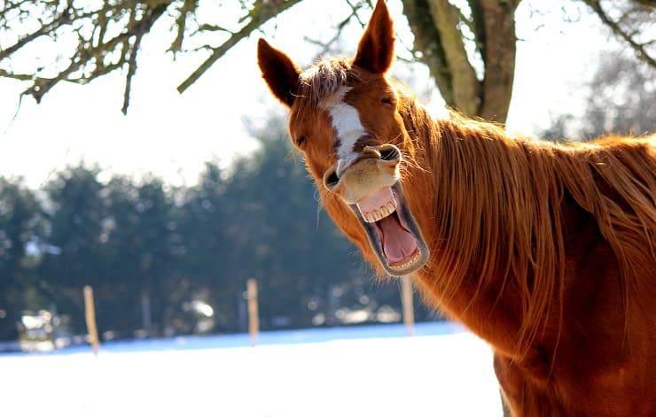 Sorrisi animali