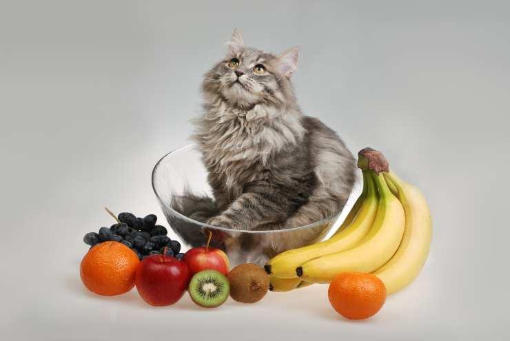 Che frutta possono mangiare i gatti