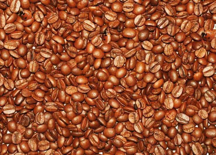 Test visivo dei chicchi di caffè trova le coccinelle e i volti di neonati