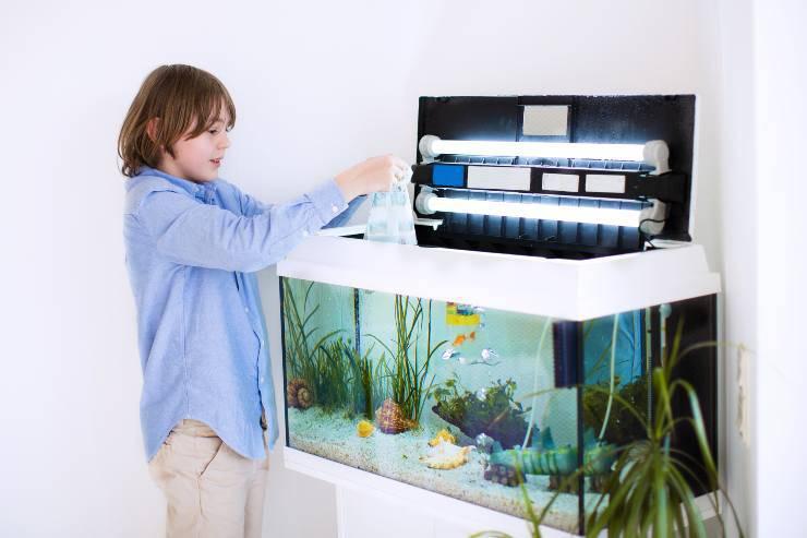 come inserire i pesci nell acquario