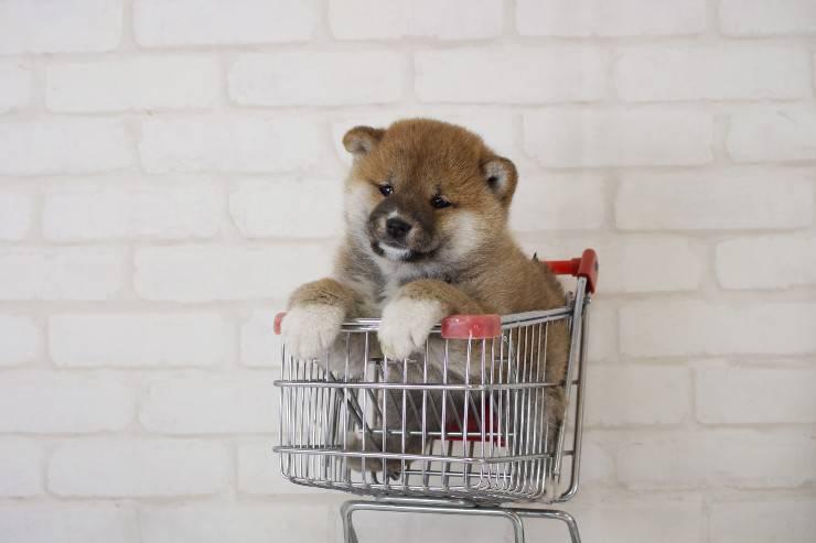 cane nel carrello