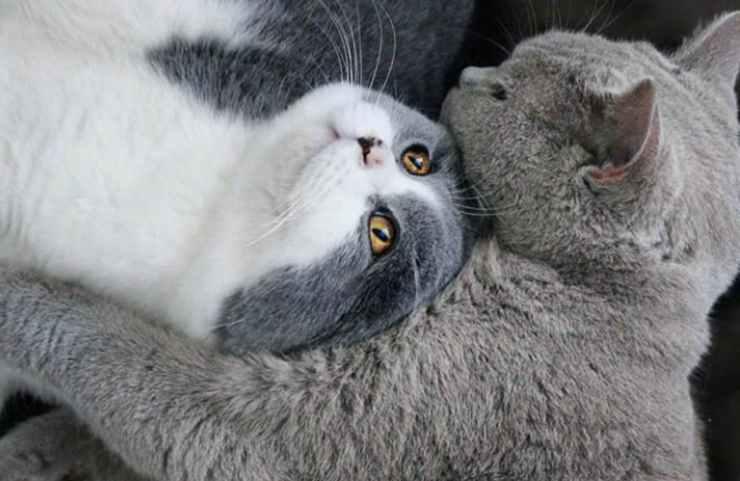 I gatti affettuosi (Foto Instagram)