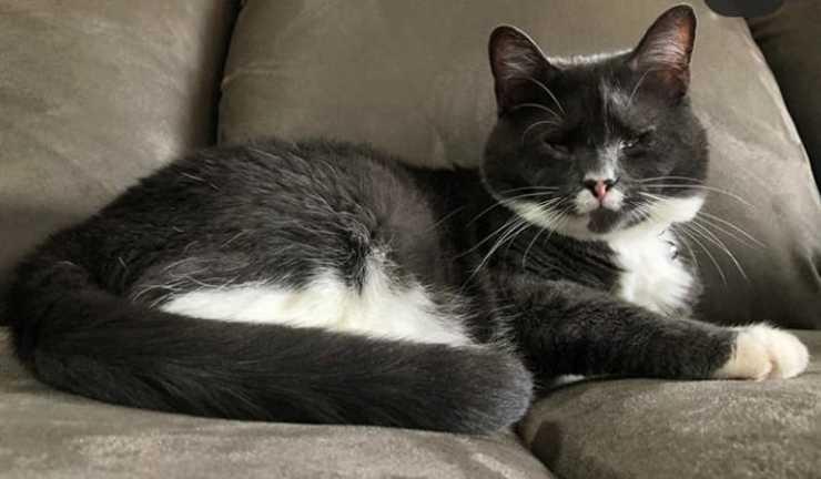 Il gatto cieco Starbuck (Foto Instagram)