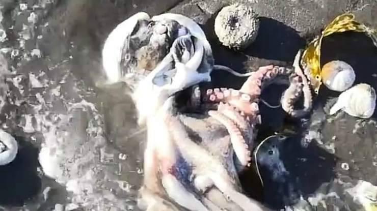 Polipo sulla spiaggia (Foto video Instagram)