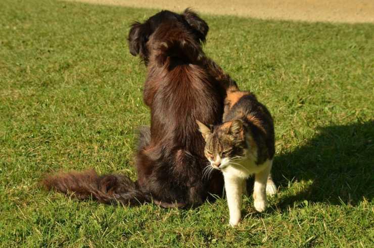 Cane di spalle e gatto