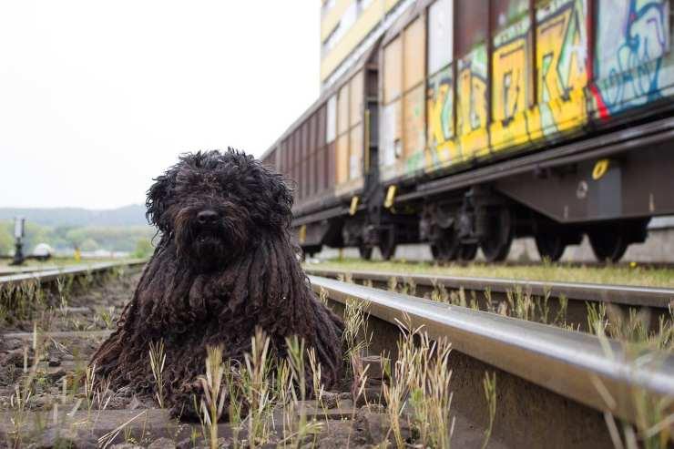 bobby stazione ferrovia