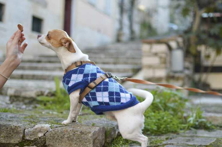 """Il cane che attende il """"premio"""" (Foto Pixabay)"""