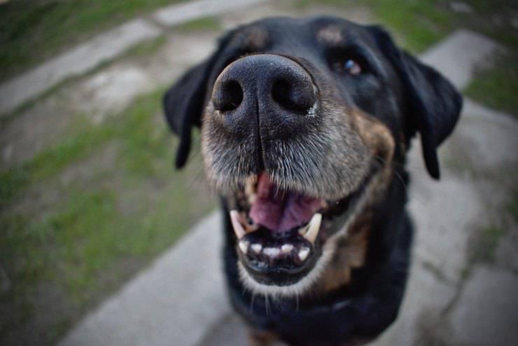 Il cane ha i denti storti