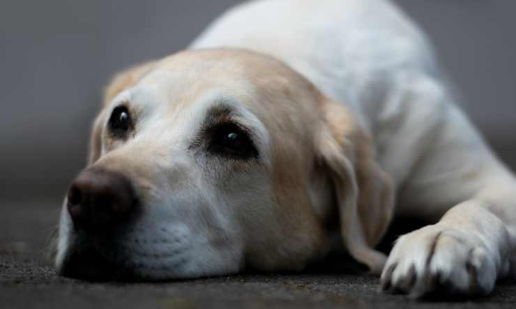 Cane in attesa (Foto Pixabay)
