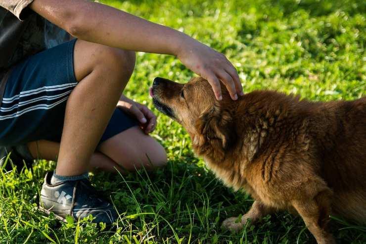 Bambino accarezza un cane