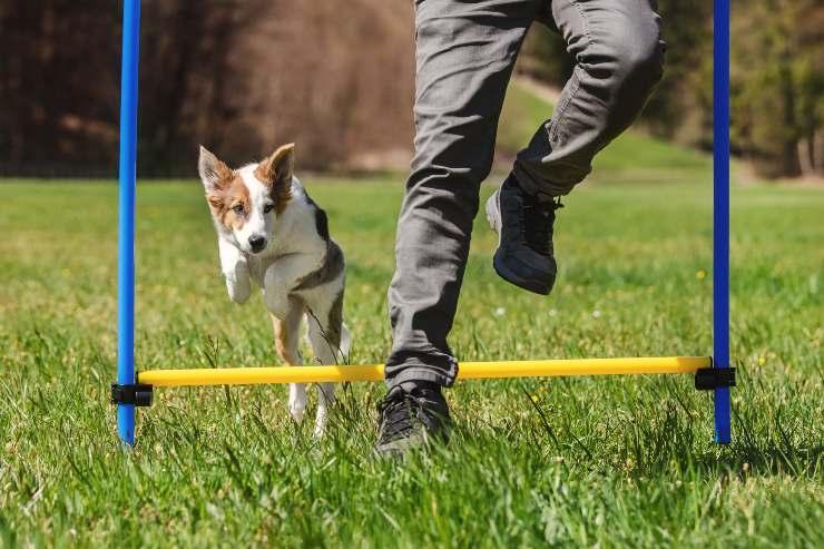 esercizio fisico cane
