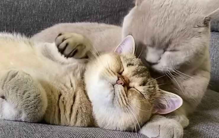 Gatti coccoloni Facebook