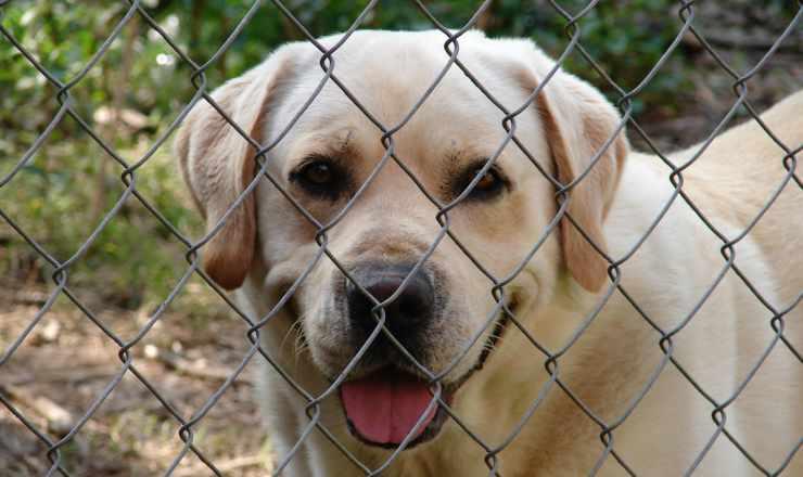 Un cane felice (Foto Pixabay)