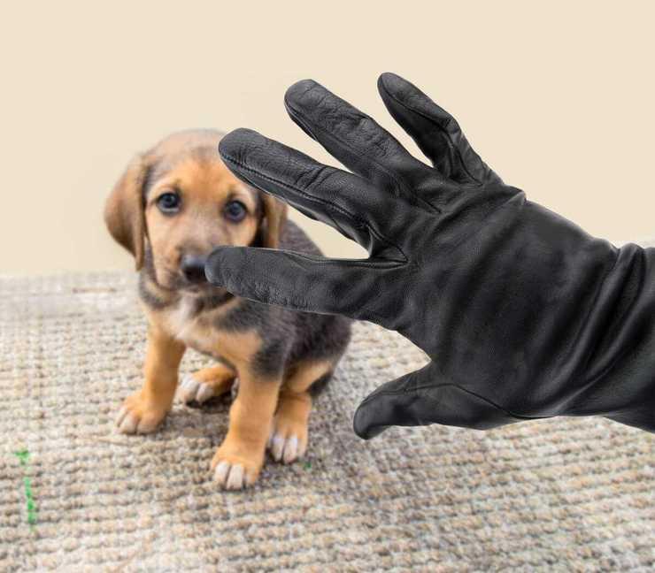 Furto dell'animale domestico (Foto Adobe Stock)