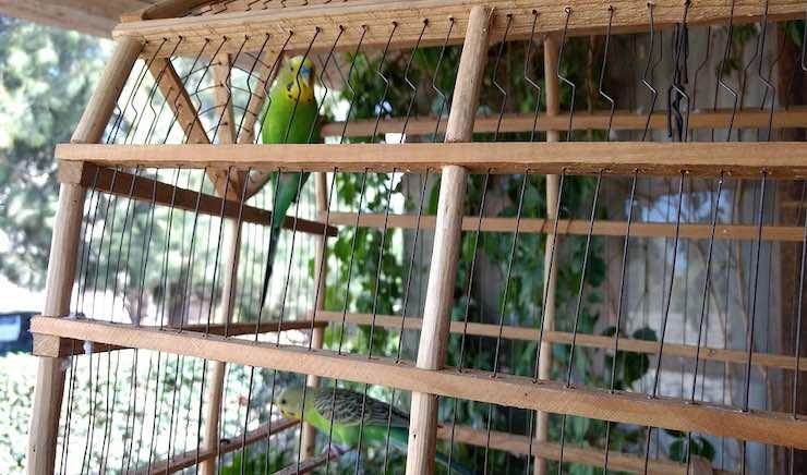 la gabbia del canarino