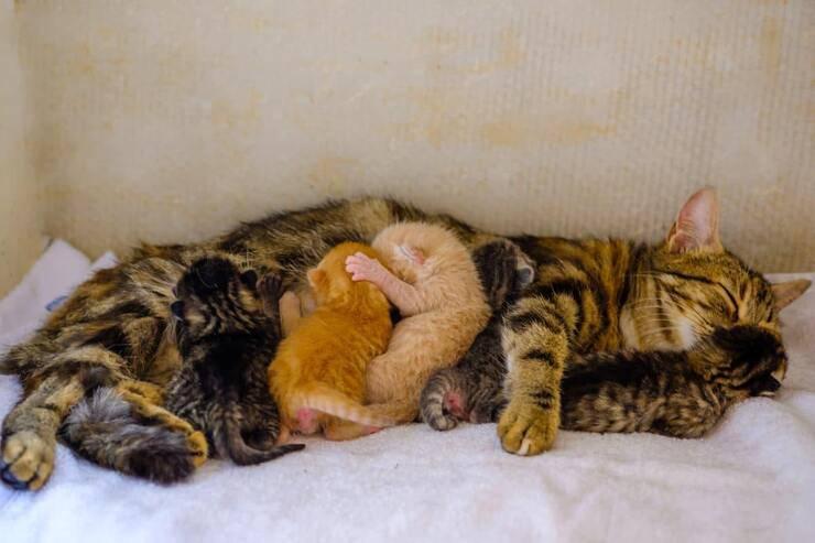 Metrite nel gatto (Foto Adobe Stock)