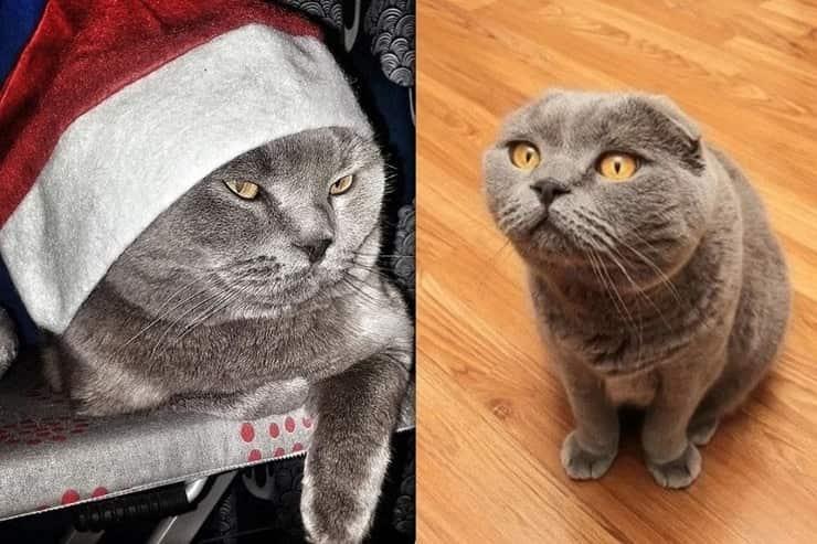 gatto dei desideri