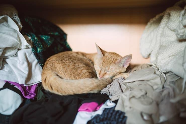 Perché il gatto dorme nell'armadio? (Foto Adobe Stock)