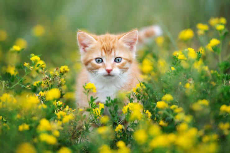 arnica per il gatto