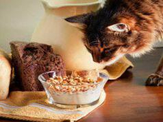 Il gatto può mangiare i cereali? (Foto Adobe Stock)