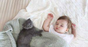 Allergia al gatto nei neonati