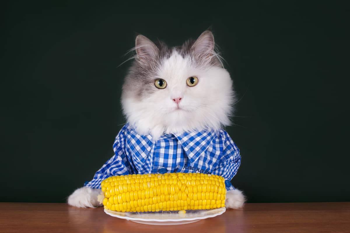 I gatti possono mangiare i cereali?