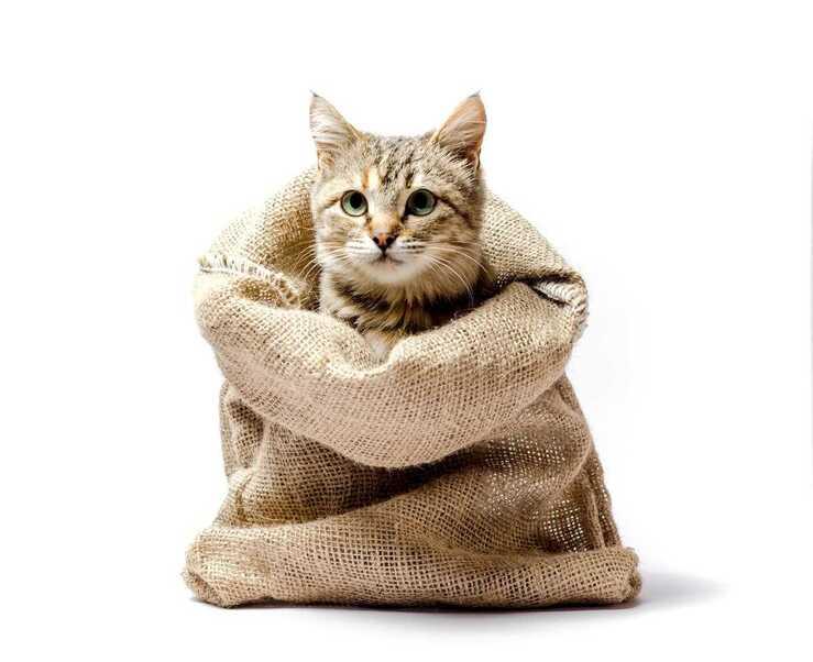 Non dire gatto se non ce l'hai nel sacco (Foto Adobe Stock)