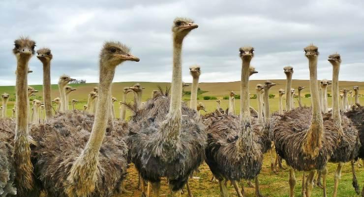 gli uccelli più grandi del mondo