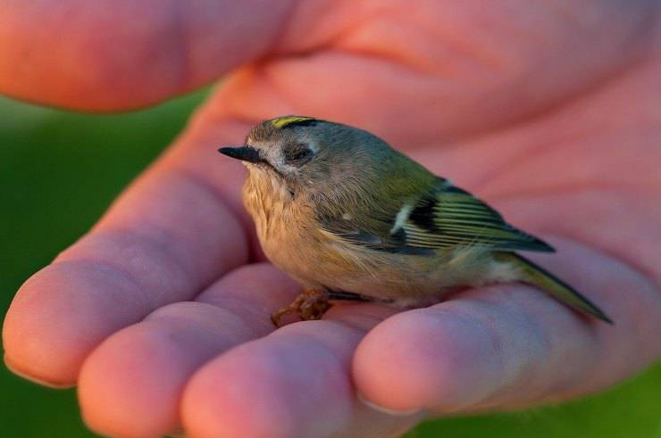 micio uccellino caduto nido