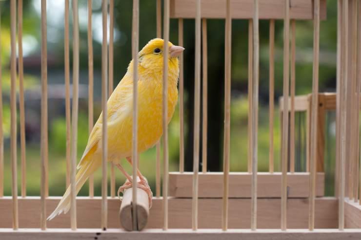 I canarini possono stare all aperto in inverno