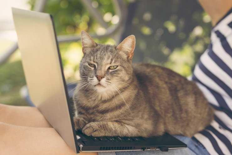 i gatti si siedono sulle cose che usiamo