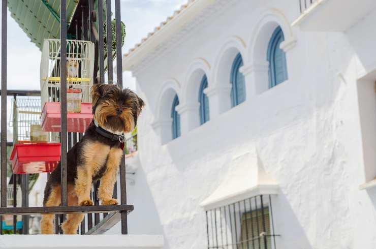il cane si può buttare dal balcone