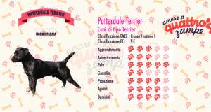 Patterdale Terrier scheda razza
