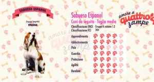 Sabueso Espanol scheda razza
