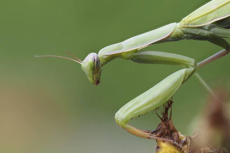 Gli insetti più rari al mondo.