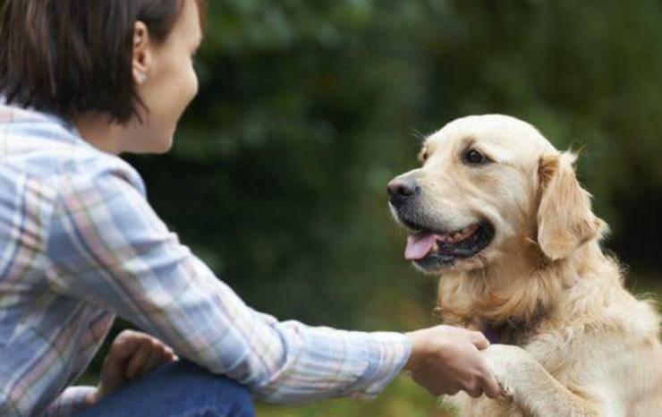 Il cane fedele verso la padrona Facebook